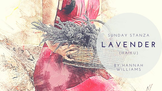 Sunday Stanza: Poem Thirty Seven- Lavender (Haiku) By Hannah Williams