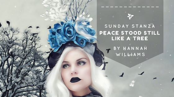 Sunday Stanza: Poem Forty- Peace Stood Still Like A Tree By Hannah Williams