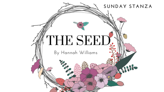Sunday Stanza: Poem Forty Two- The Seed By Hannah Williams